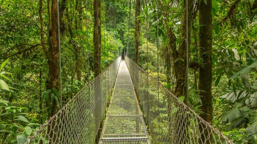 Suspended walking bridge in Costa Rica rainforest