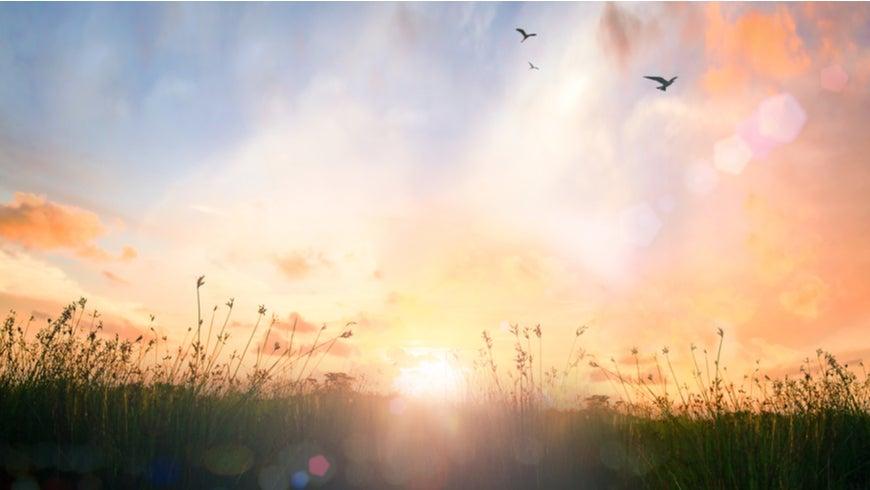 Meadow sunrise landscape