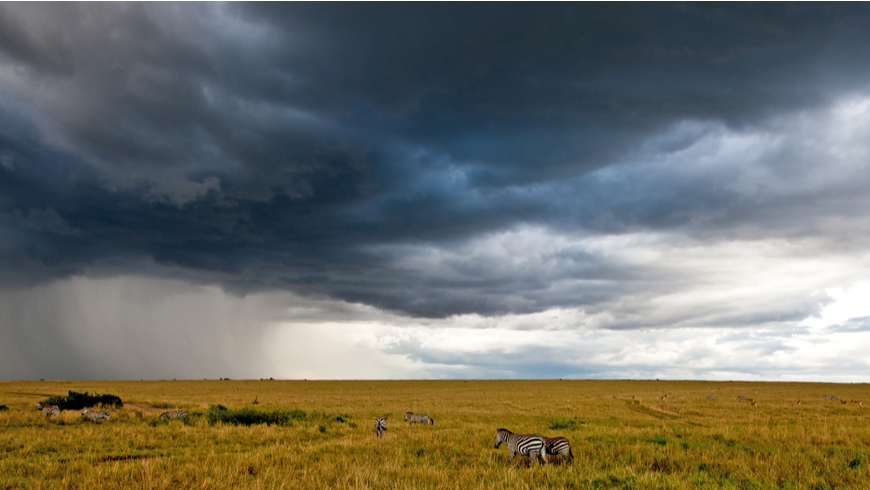 African landscape with stormy sky and zebras, Maasai Mara, Kenya
