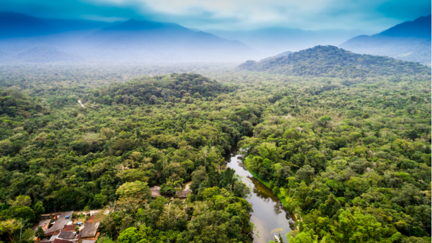 As a key global player in forest conservation, the GEF has been at the forefront of efforts to protect the most important forests in the world from degradation. Photo: Gustavo Fradao/Shutterstock.