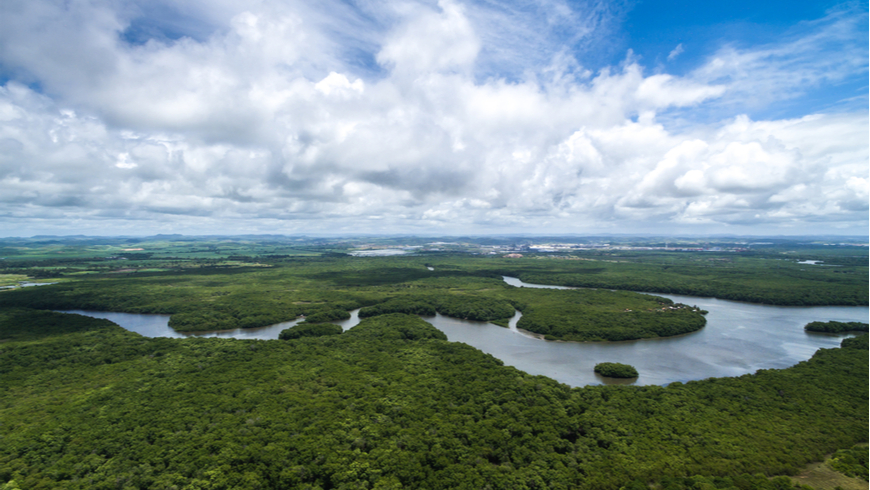 Aerial shot of Amazon rainforest in Brazil, South America. Photo: Gustavo Frazao/Shutterstock.