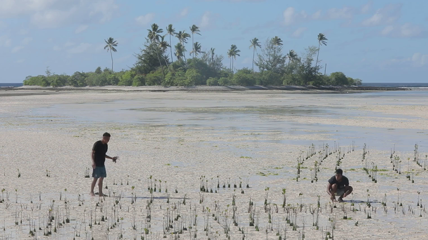 Men picking crops from beach in Kiribati