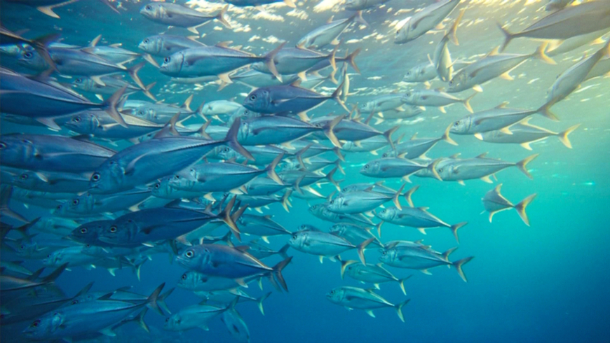 Managing ocean resources is a global responsibility that requires focus and perseverance. Thirty percent of the world's fish stocks are overexploited, threatening fish and plant species and the ability of people who depend on marine and coastal biodiversity to earn a living and feed their families. Photo: NaniP/Shutterstock.