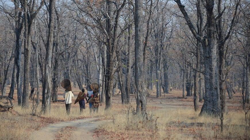 A Zambian Forest
